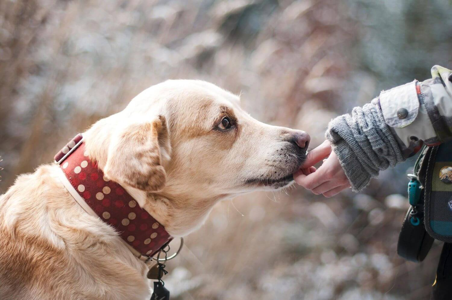 The principles Of Dog Food Education
