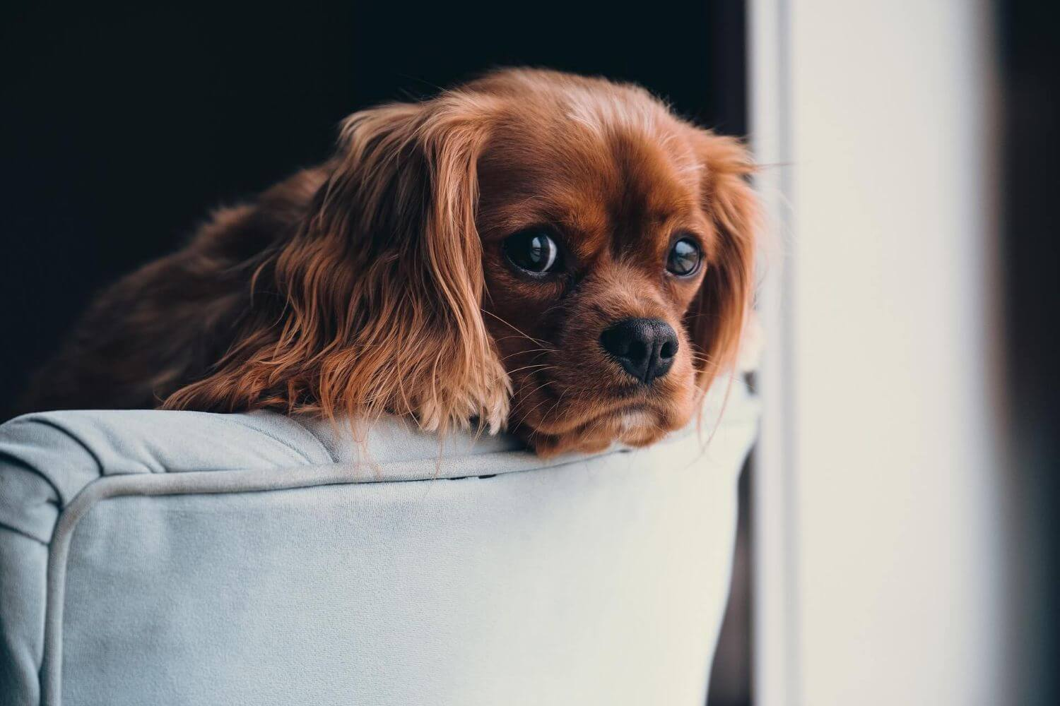 What you should do in the first days with your puppy