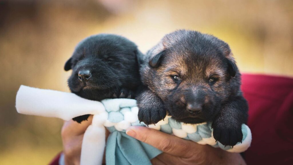 All you need to know about breastfeeding your puppy