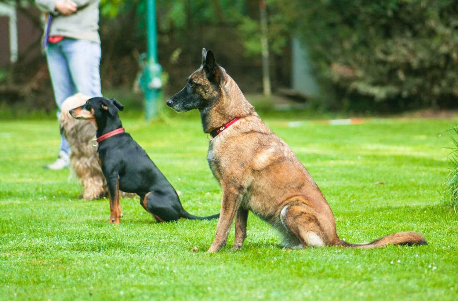 Breeds of sporting dogs
