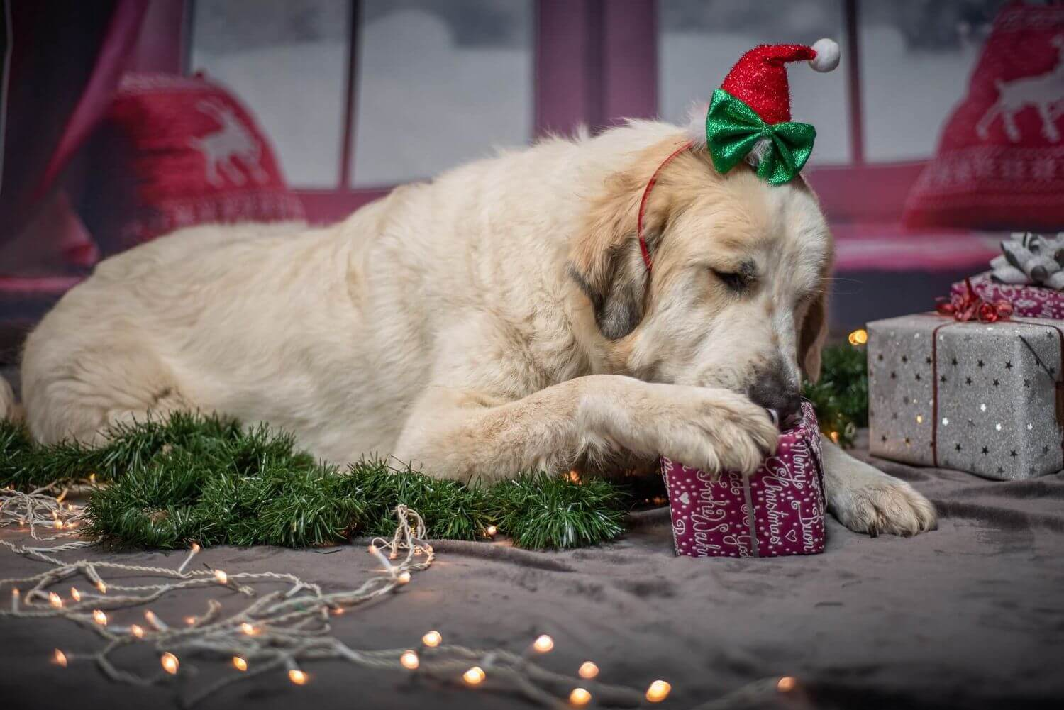 Christmas Gifts for Dogs
