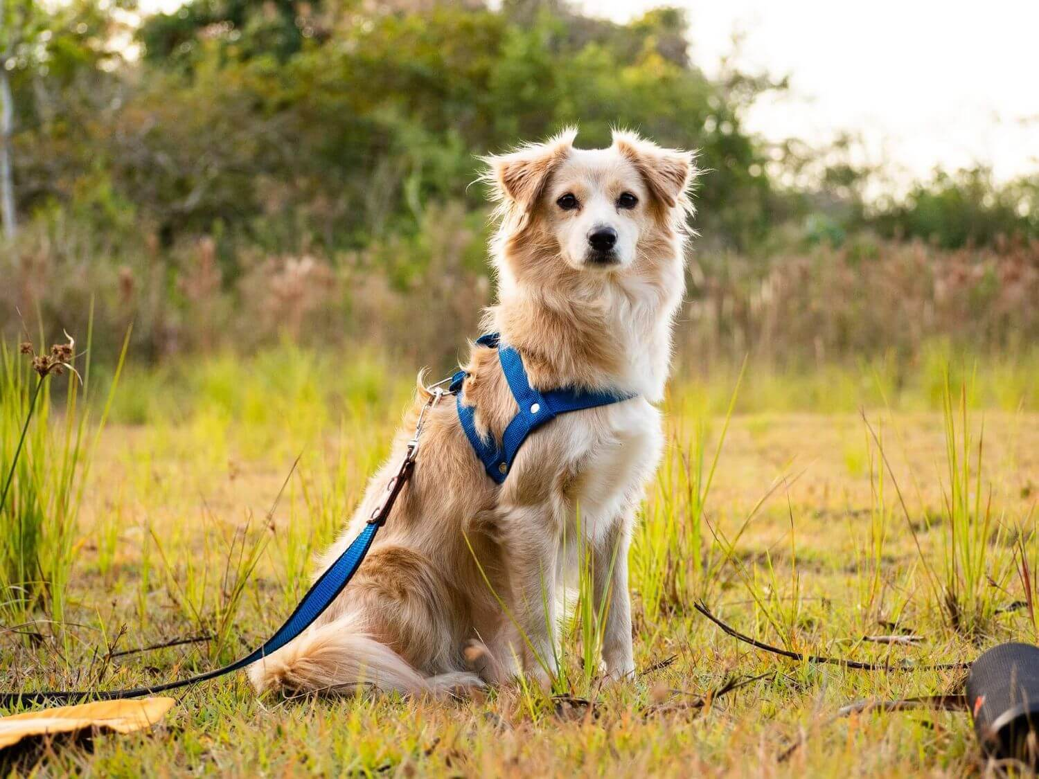 Collar or harness: what should I choose for my dog?