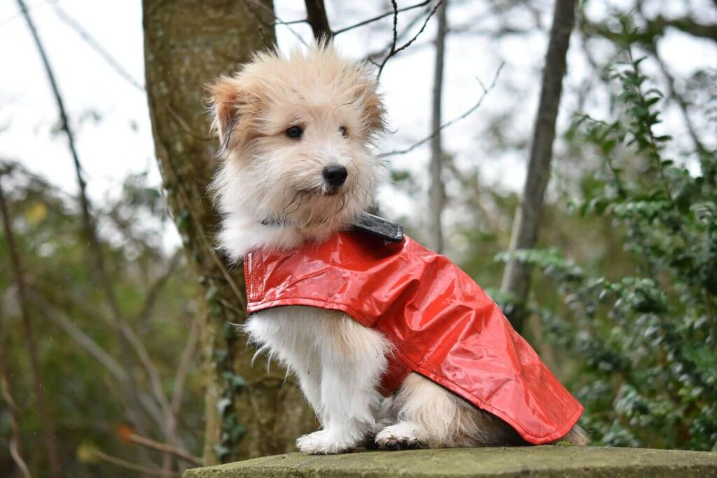 Comparison of winter coats for dogs