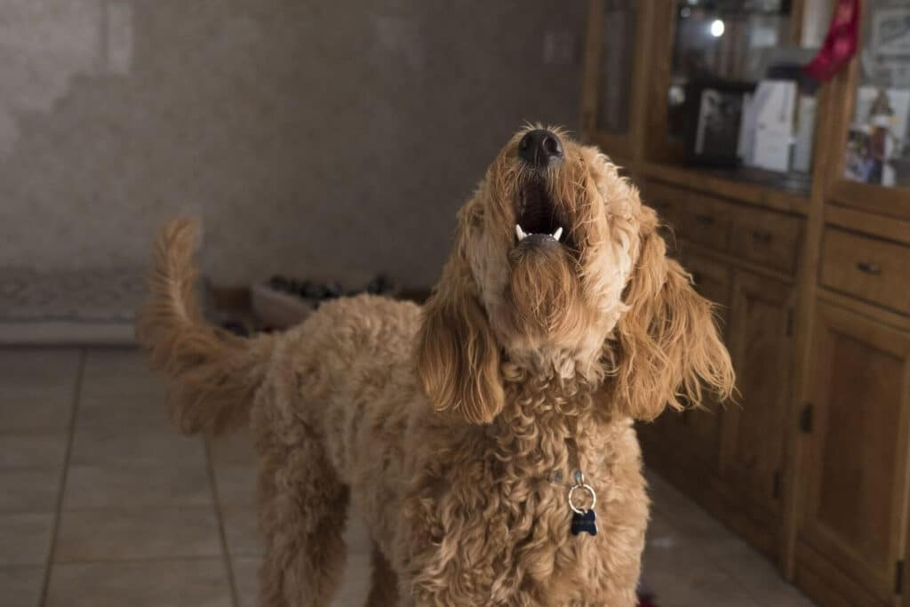 Eliminate undesirable behaviors of your dog