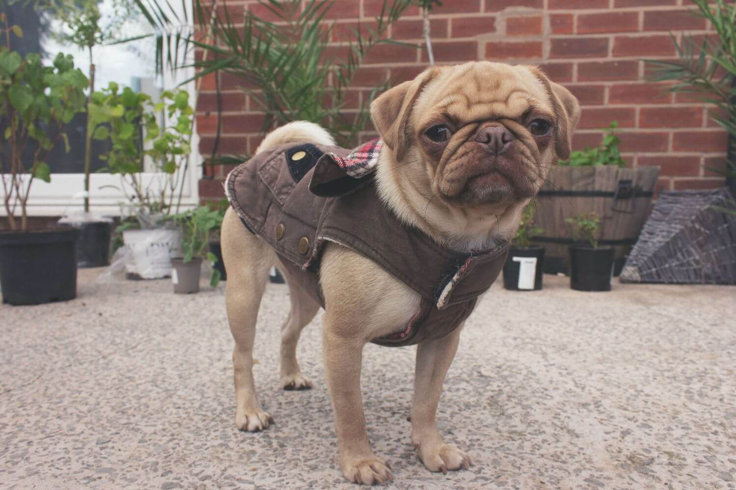 How to choose a coat for your dog