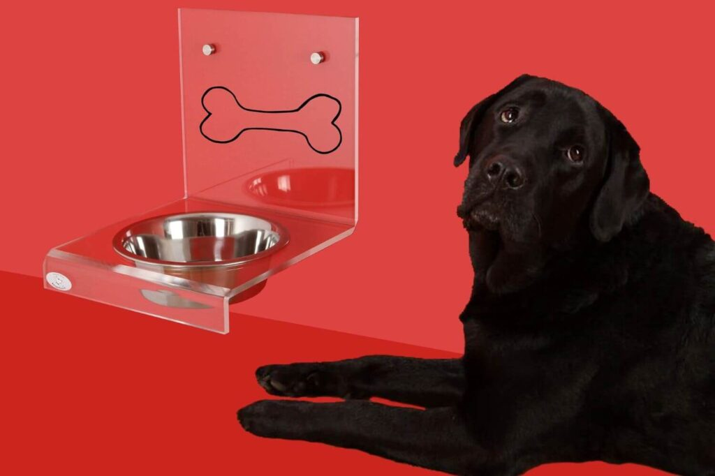 How to choose the right bowl for your dog?