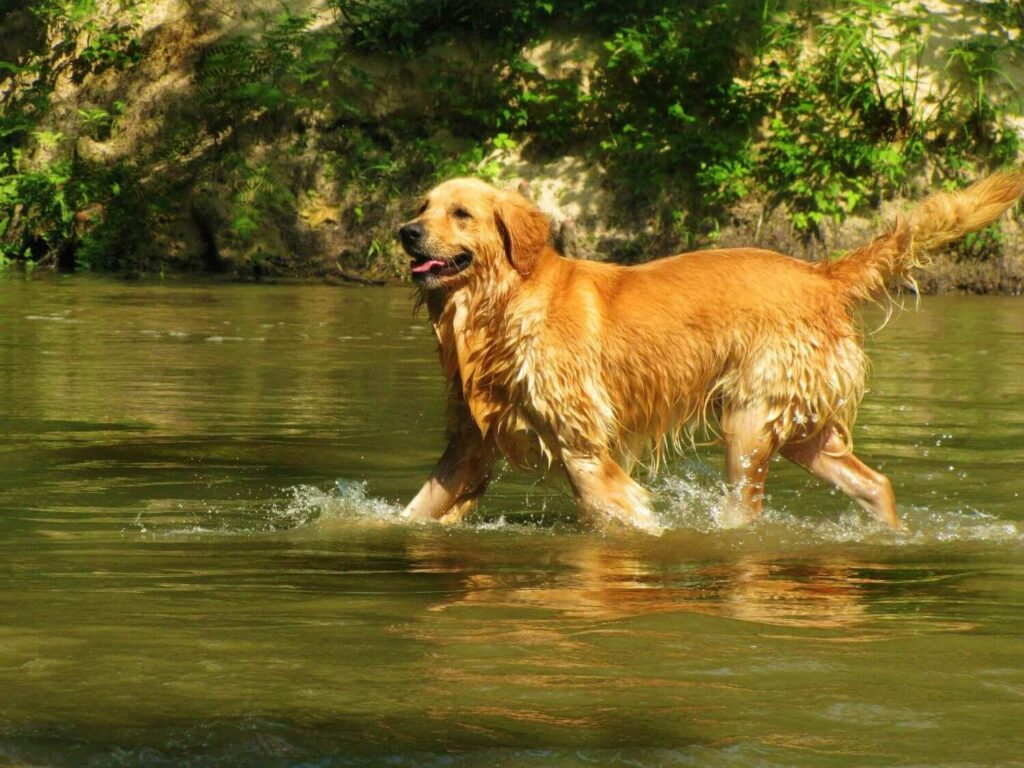 How to refresh your dog in summer