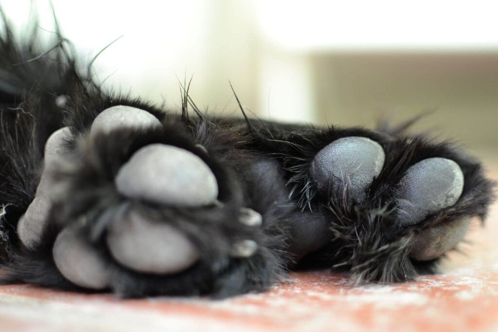 How to take care of your dog's paw pads