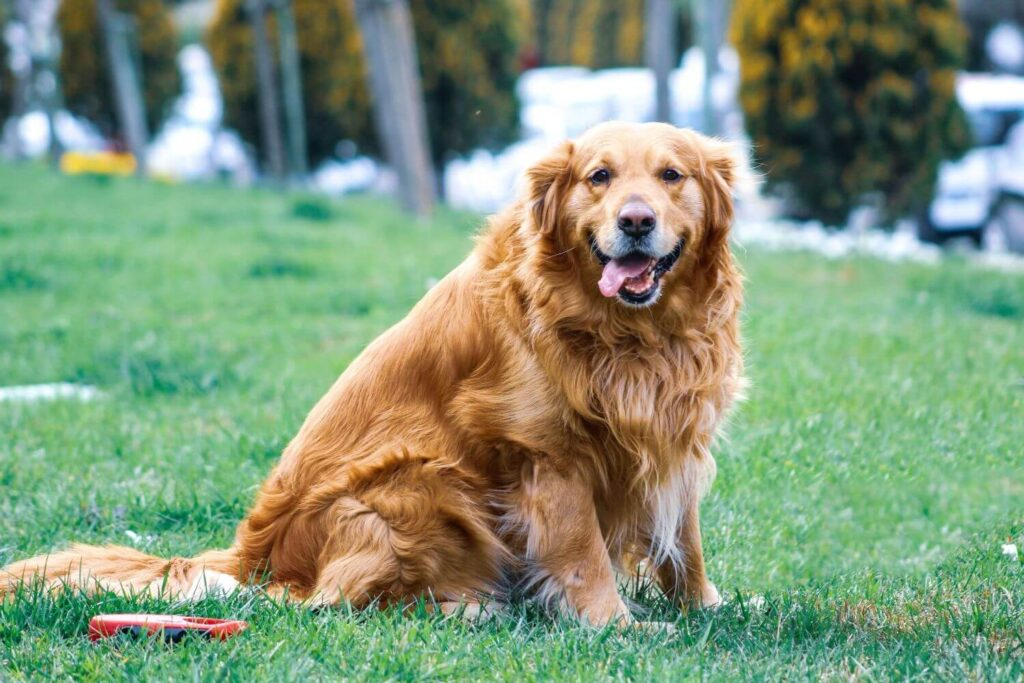 My dog eats cat poop why and what to do