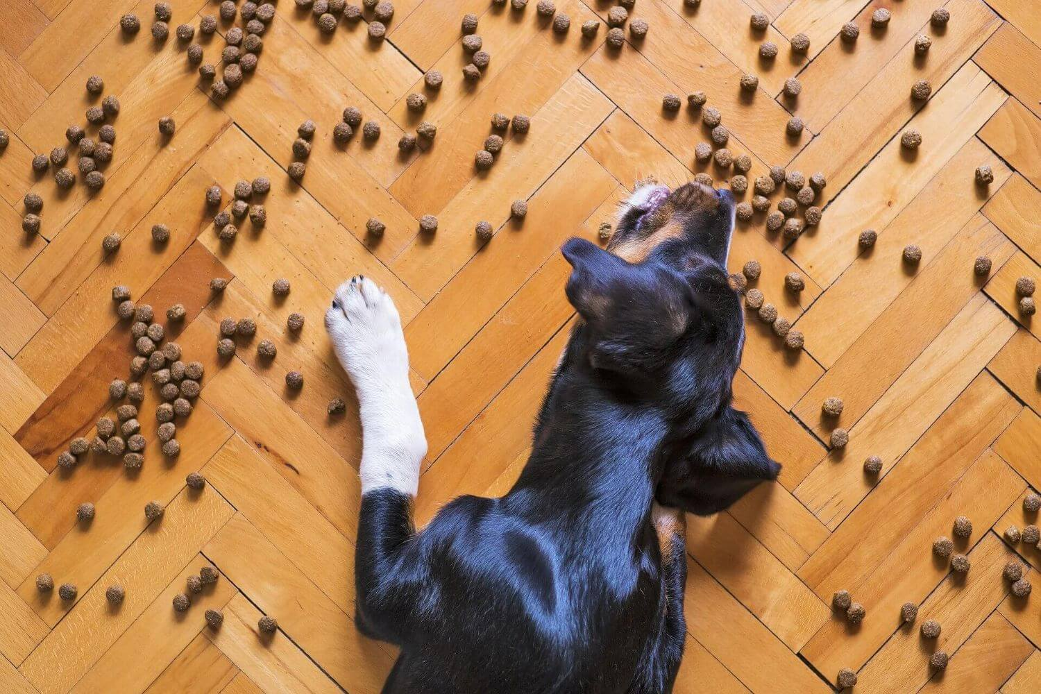 My dog eats too fast: why and what to do?