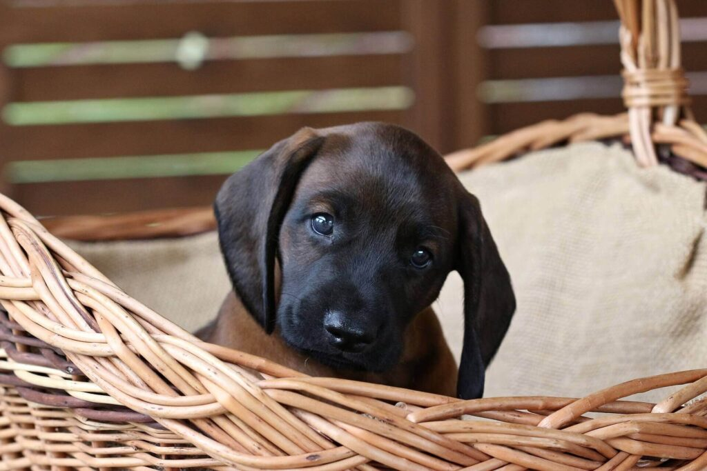 My puppy pees in his basket, what can I do?