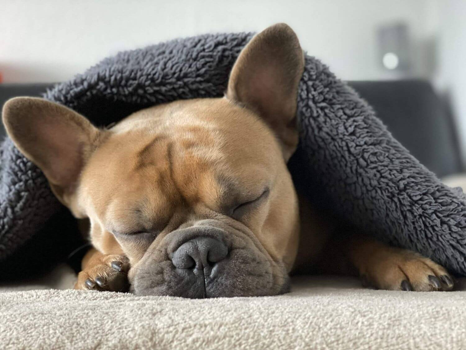 Sleep in dogs 4 most common disorders