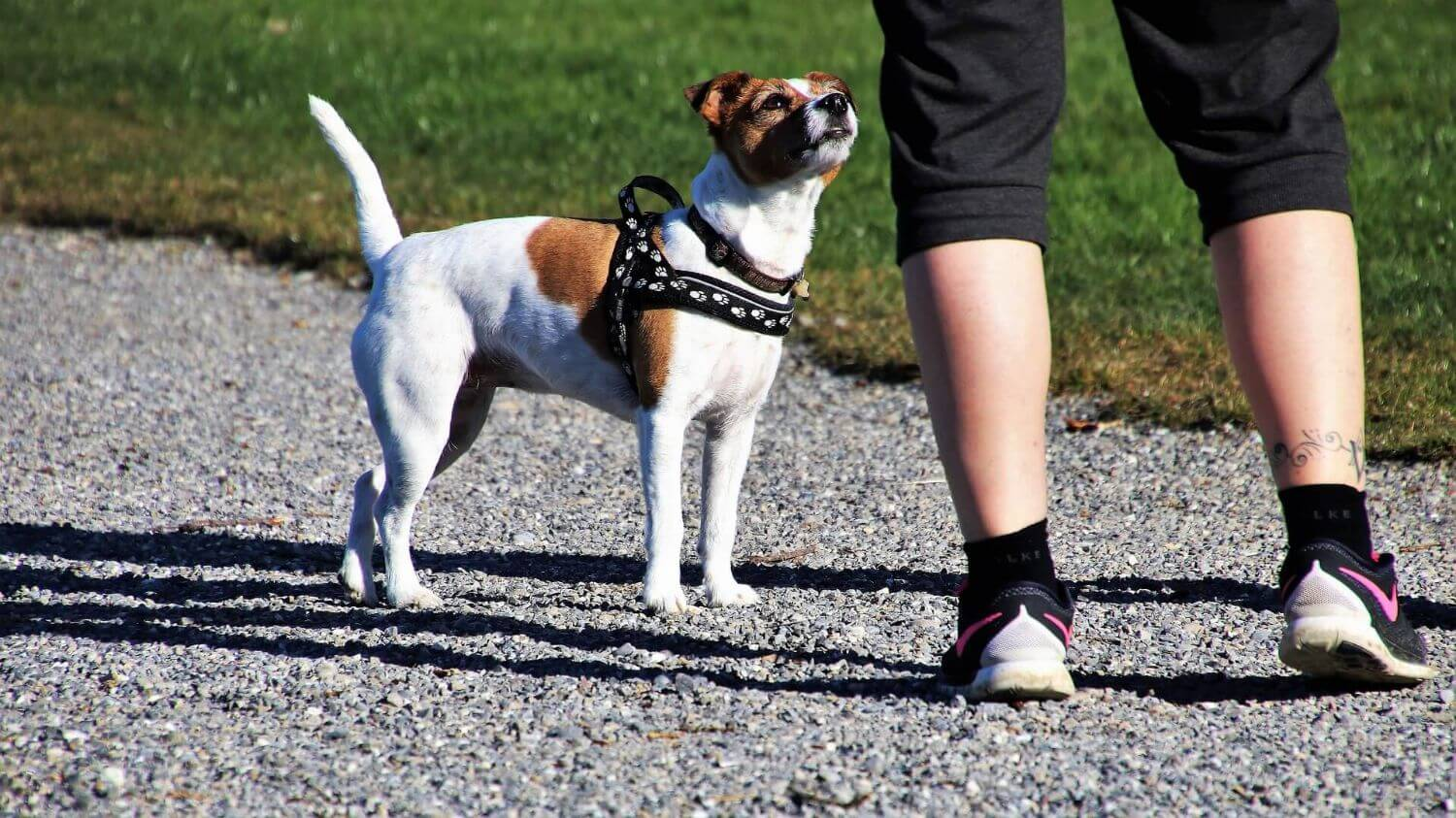 Sports activities to practice with your dog