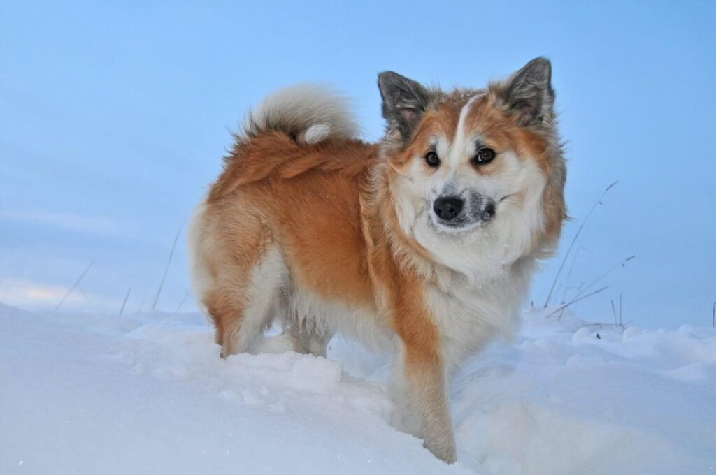 Taking your dog to the snow a practical guide