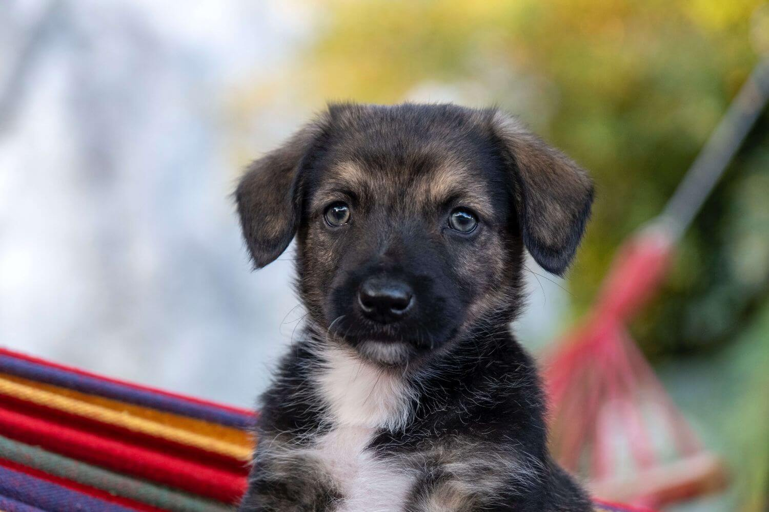 The checklist to welcome a puppy at home