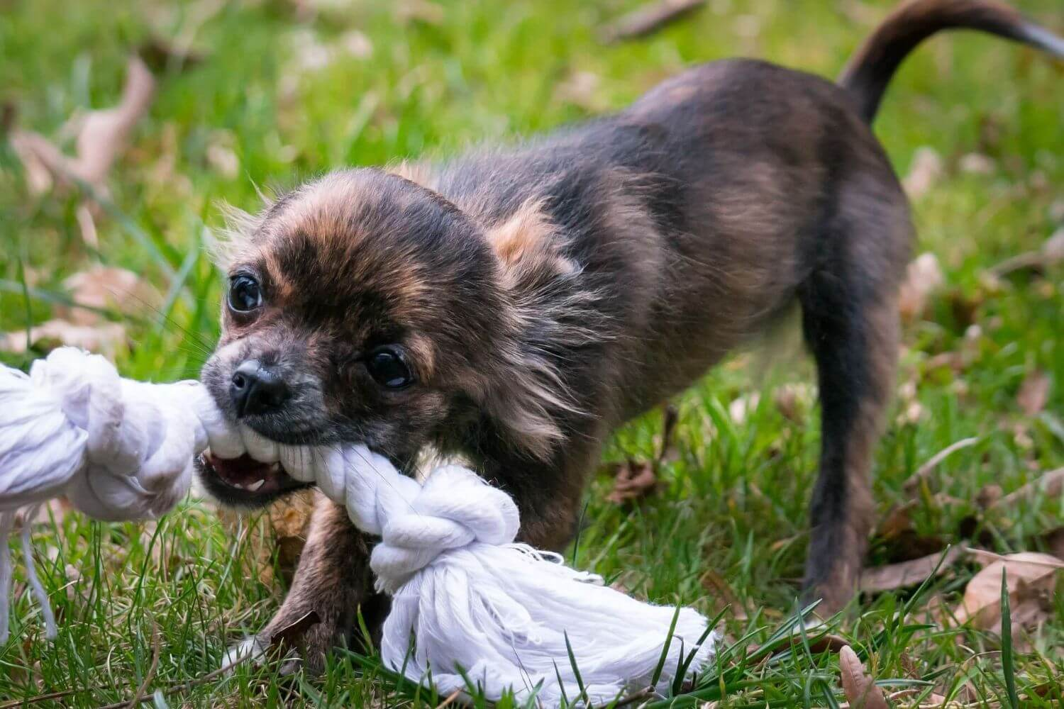 Tips and tricks to prevent a puppy from biting