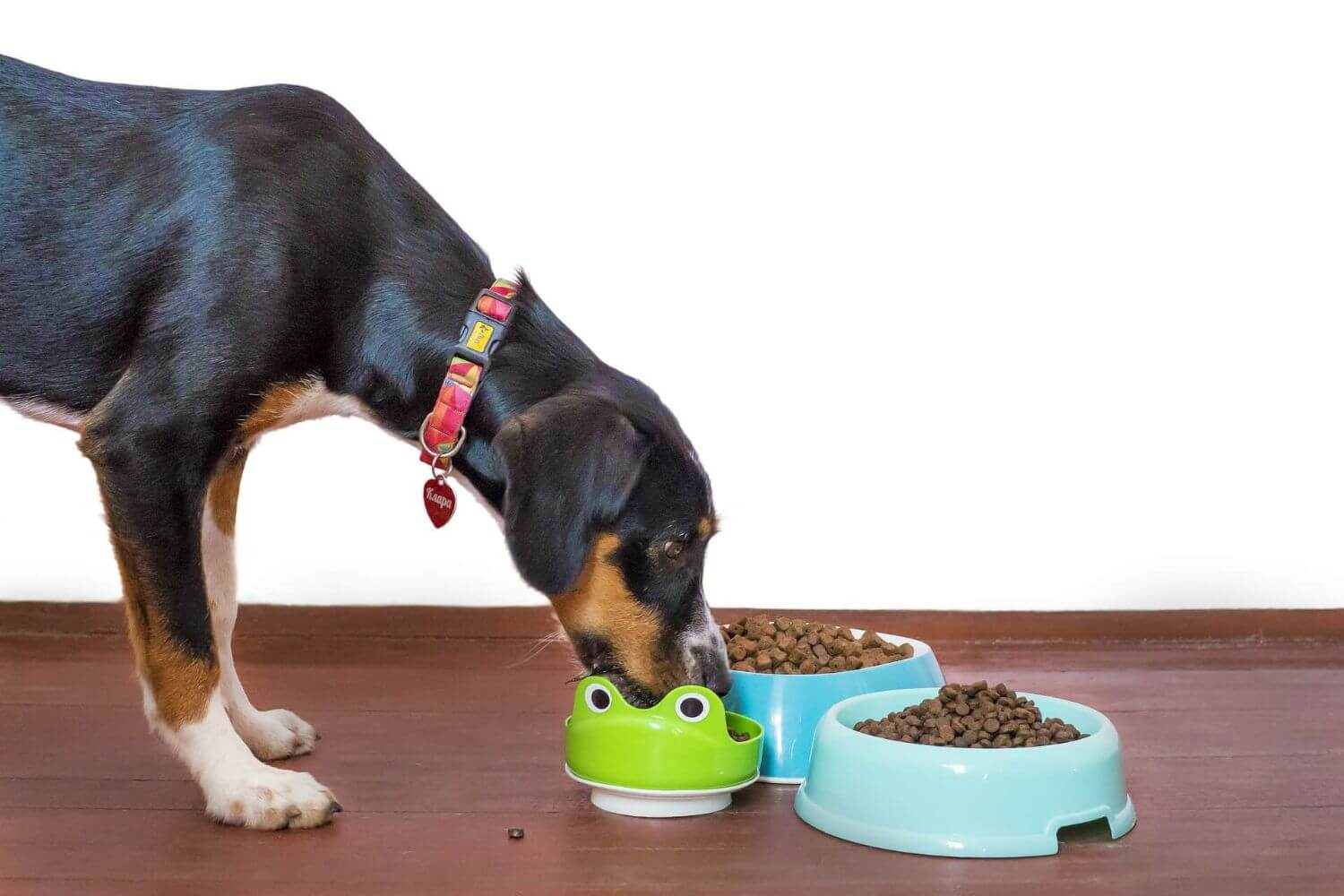 Weigh carefully every day the necessary quantity of kibbles.