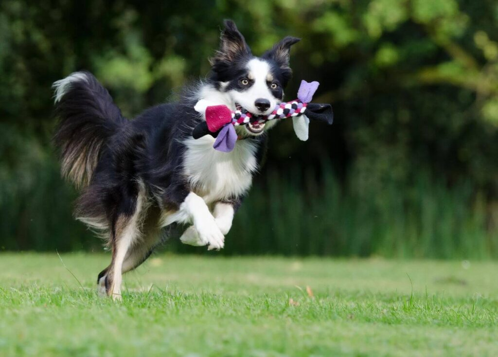 What Activities  You Should Do With Your Dog