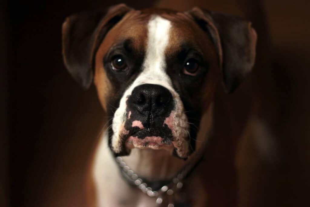 What to do if your dog is crying