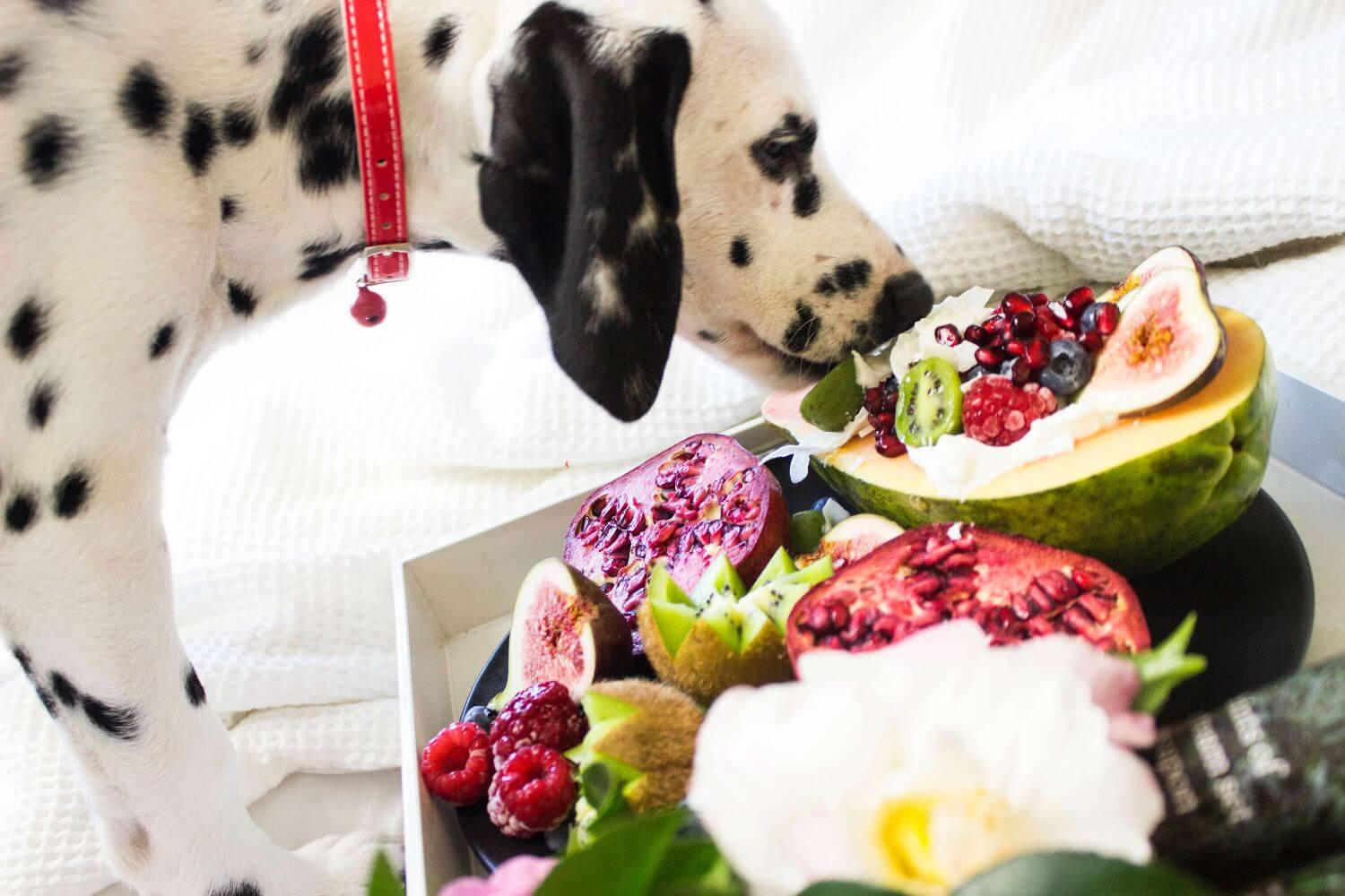 You Should Care About Your Dog Diet
