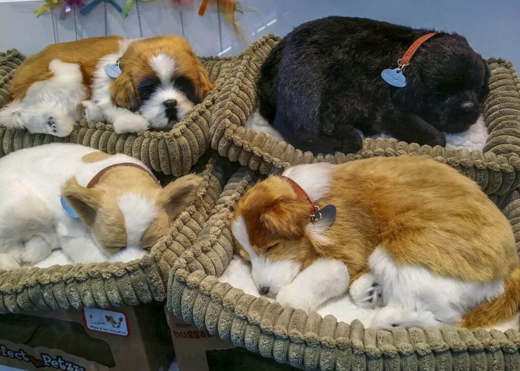 Dog basket: ensuring the right bed for your dog
