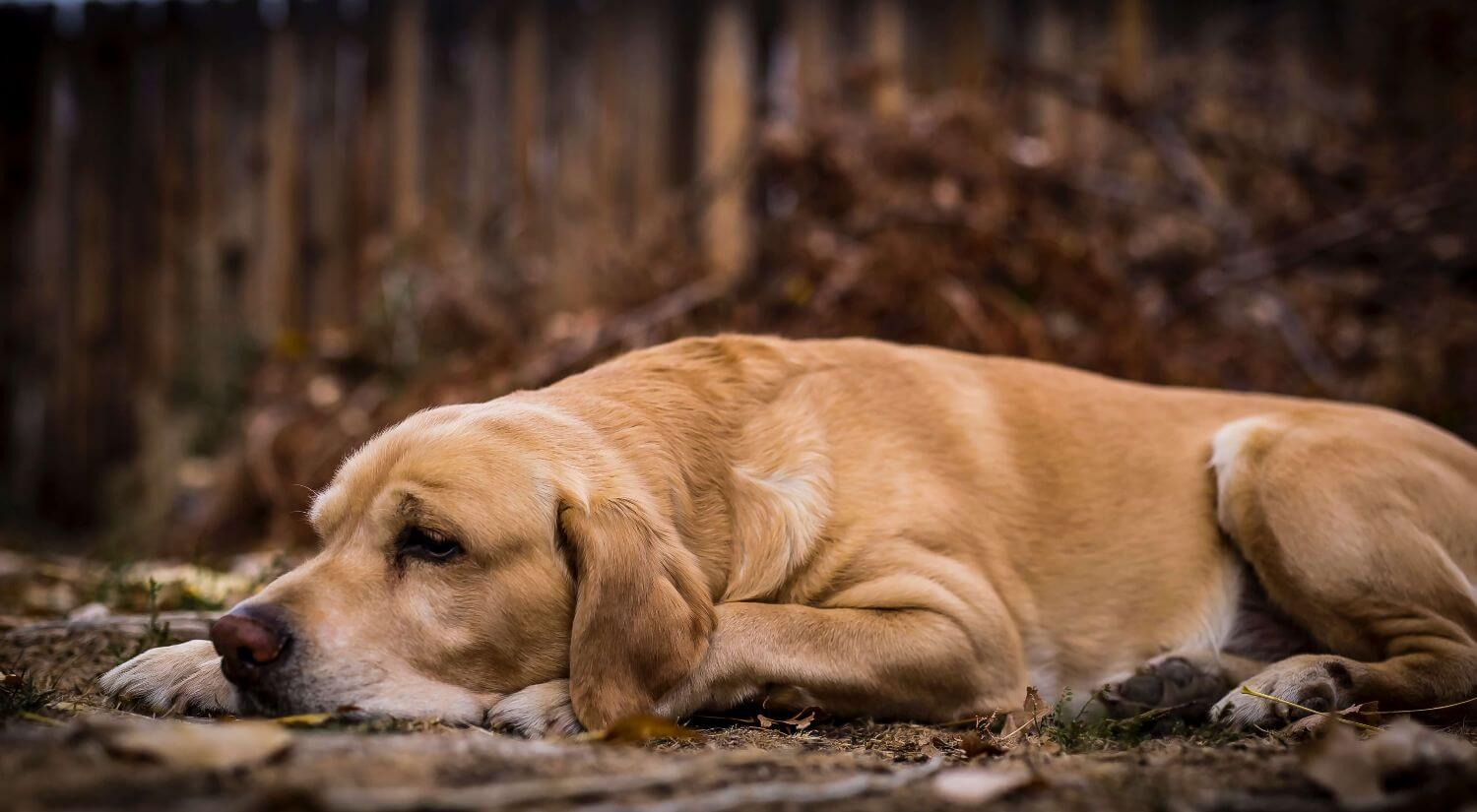 How do I know if my dog is overweight?