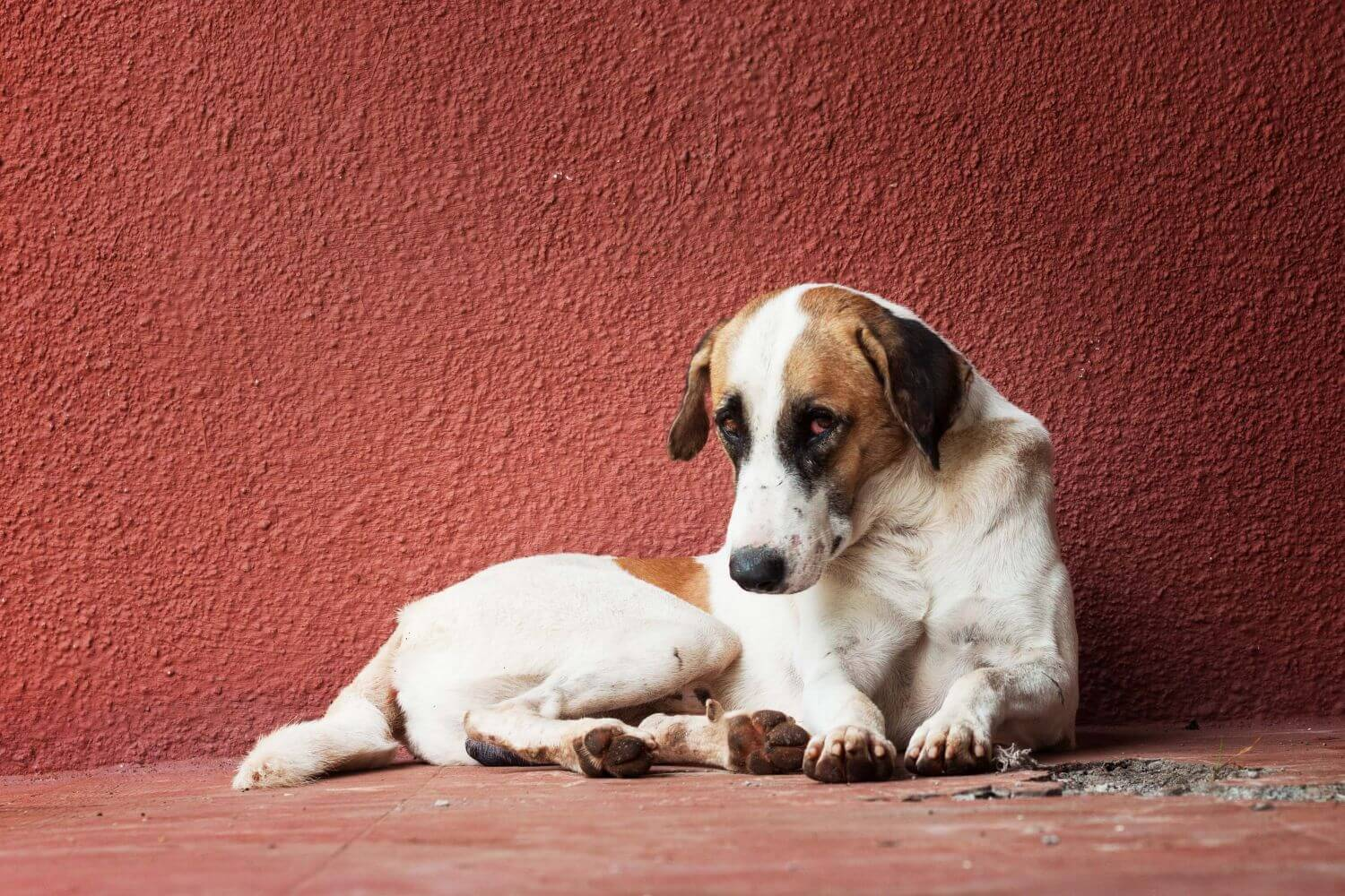 How to clean and care for a dog's wound