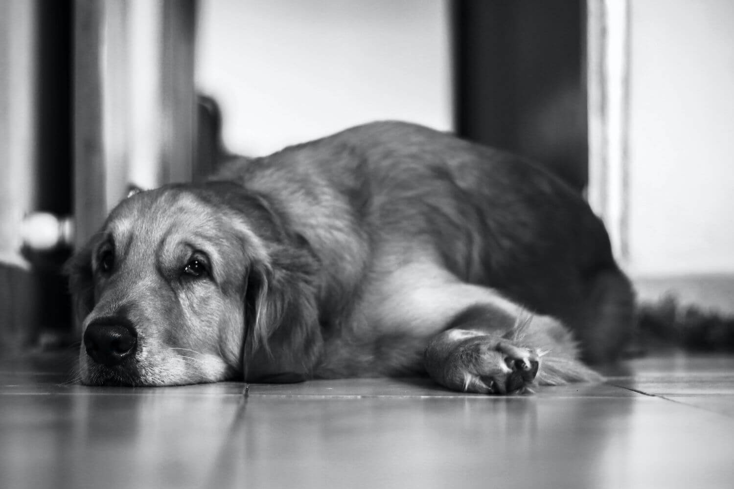 Prevent disease and monitor your dog's health