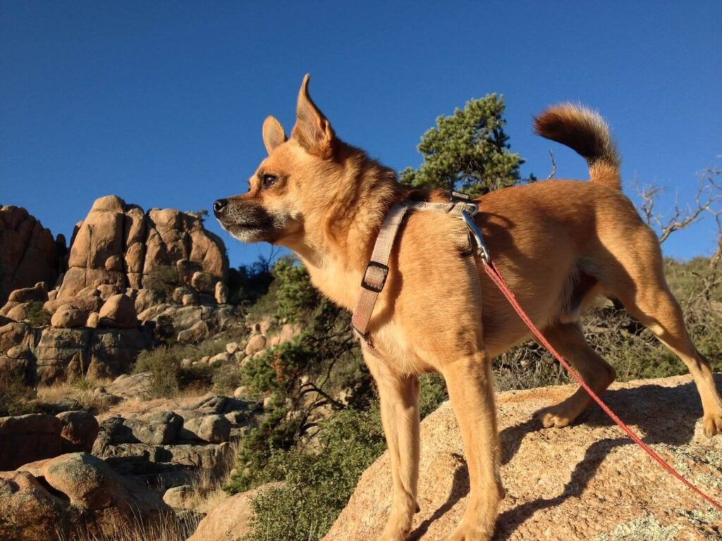 Tips to go hiking with your dog