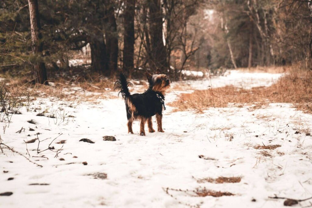 What To Do If Your Dog Runaway