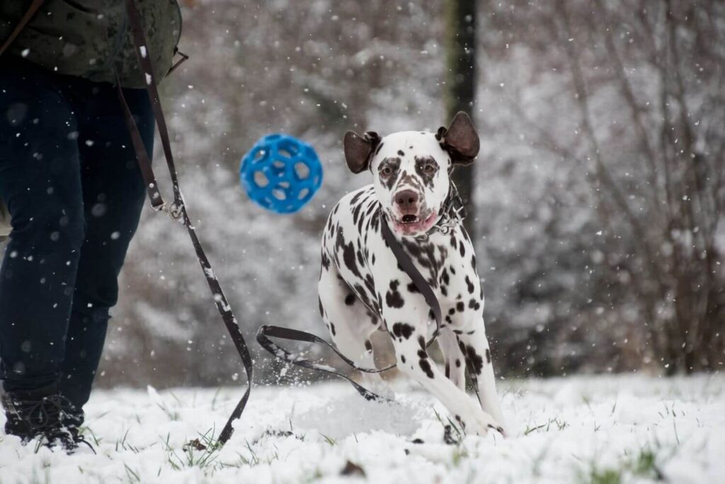6 activities to do with your dog when it rains