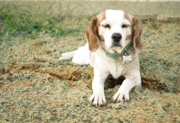 Mold allergy in dogs: symptoms &Treatment