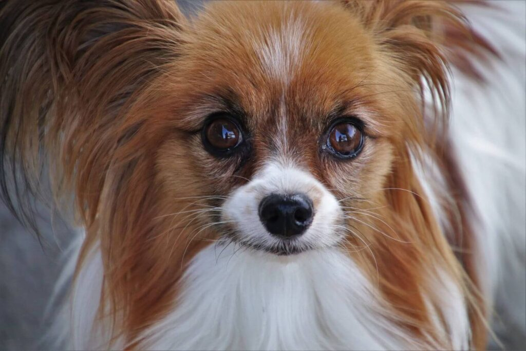 Causes and Treatments for Dog Eye Discharge