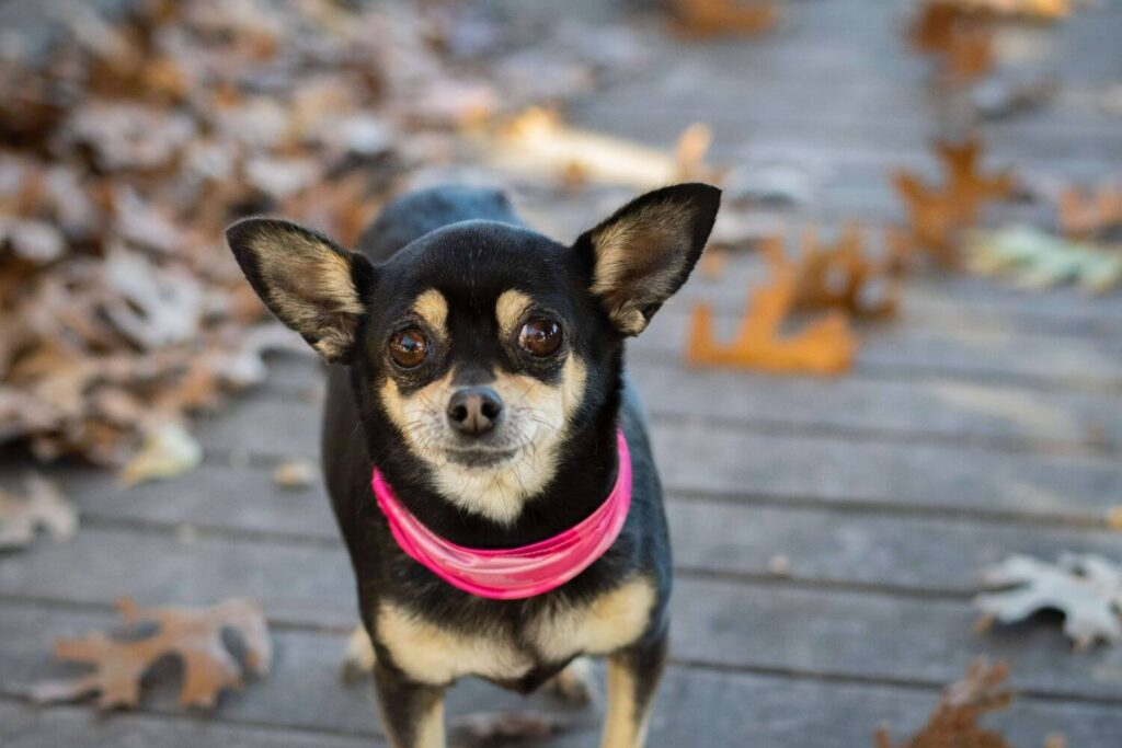 Dog Breeds That Could Dramatically Spike Your Homeowners Insurance